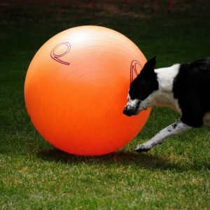 Treibball ballen